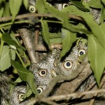 New Fascinating Owl Photos Gallery