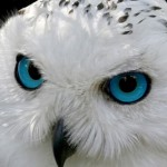 Newly Added  Owl Photos