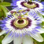 New Additions to Exquisite Flower Photos – I love 'em: Hope You Do Too!