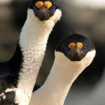 New Exquisite Bird Photos Added – Check 'em Out!