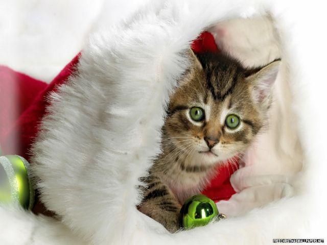 Christmas Kitten Lg