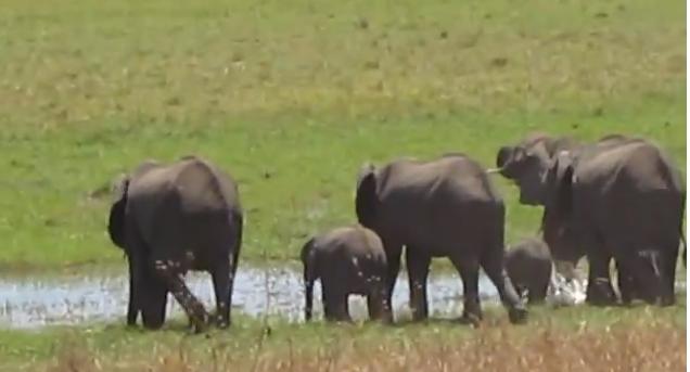 Elephants Video Screen Shot