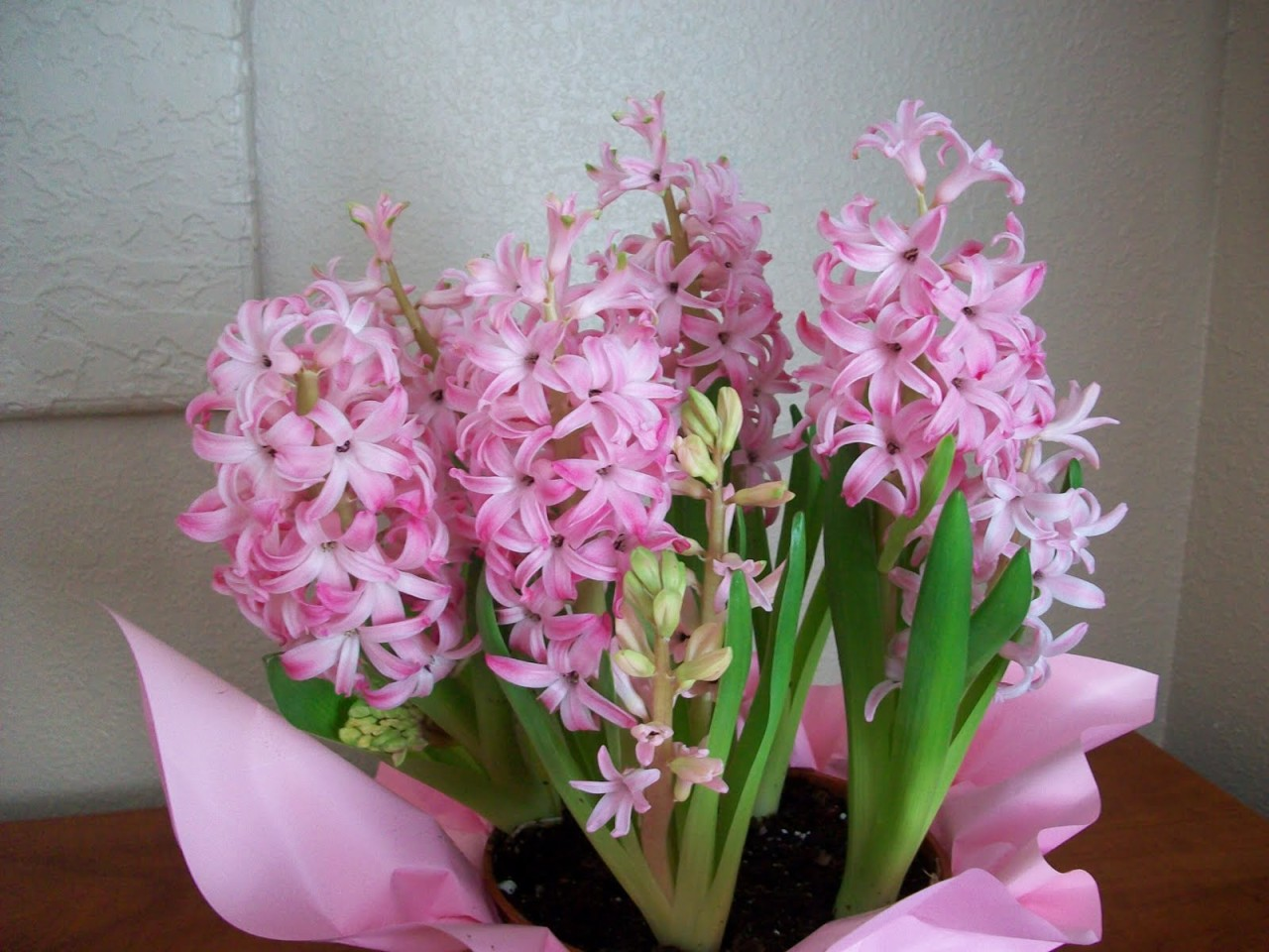 Pink Hyacinth by whatcomflowers.net