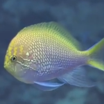 Dakuwaqa's Garden – Gorgeous Underwater Footage from Fiji & Tonga