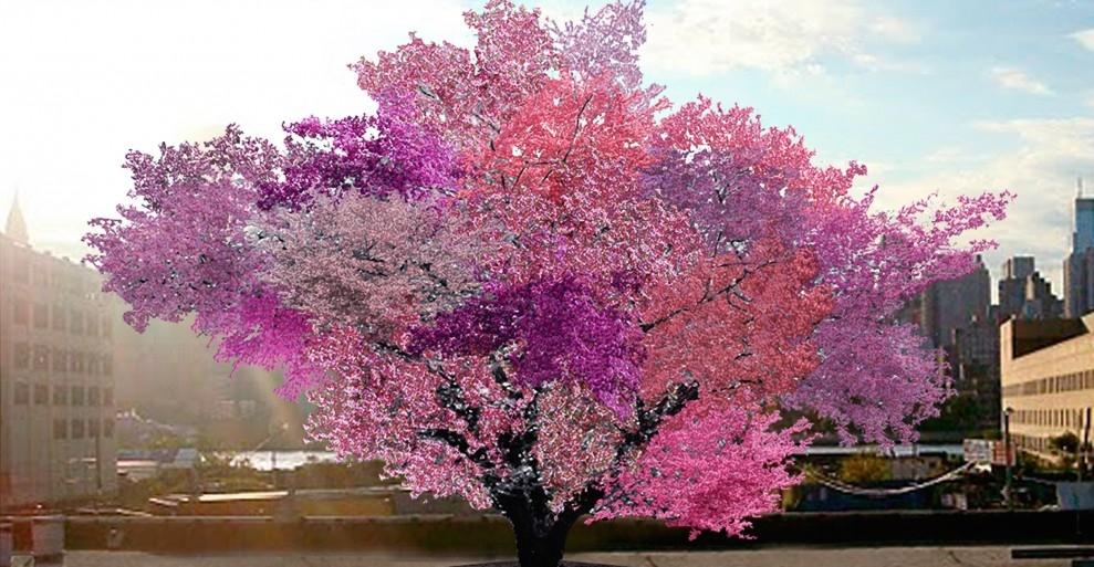 40 Fruit Tree