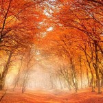 An Autumn Image to Brighten Your Day October 9