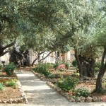 Israel's Military Cemetery, Gethsemane and the Western Wall