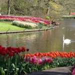 Hungry for Spring? World Famous Keukenhof Gardens Show it Best