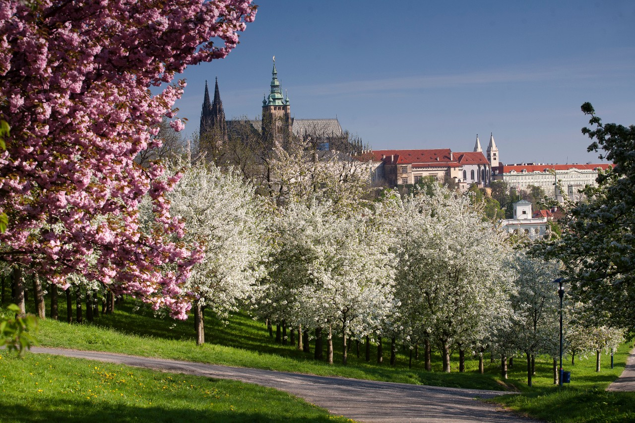 prague-castle-in-spring