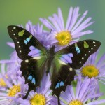 Over 20 New Images Added to Beautiful Butterflies Photo Gallery.