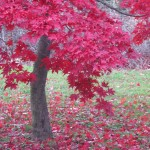 An Autumn Image to Brighten Your Day October 2
