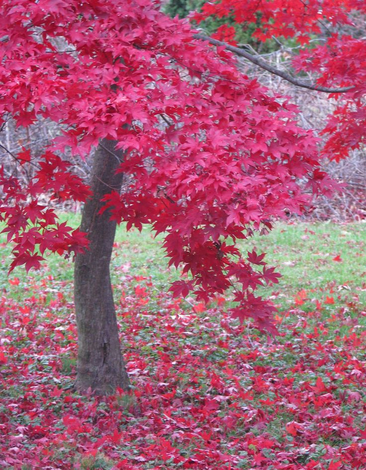 Red Autumn Leaves found on images,.search.yahoo.com by Diane Aldrich