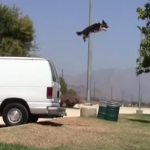 Just Jumpy the Dog – How Much Can He Do in 2 Minutes?