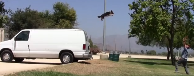 Jumpy the Dog