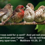 Sparrow at Starbucks – a Coincidence or More?