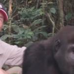 Tansy Aspinall And The Gorillas: Reunited At Last!