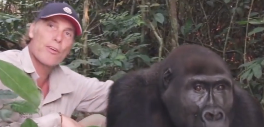 Damien Aspinall and Gorilla Friends