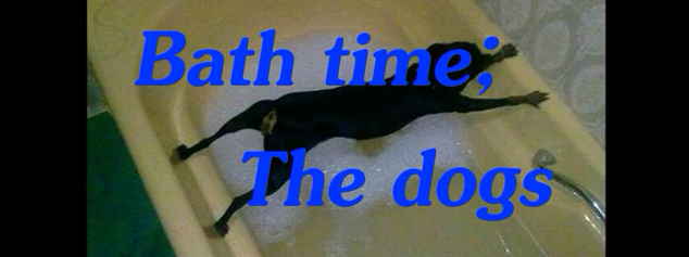 Bath Time: The dogs