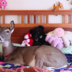 Dillie the Deer: Love on Tiny Hooves