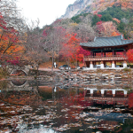 Incredibly Gorgeous Images From Korean Gaviota Photo Site