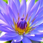 Don't Miss New Images in the Exquisite Flower Photos Gallery