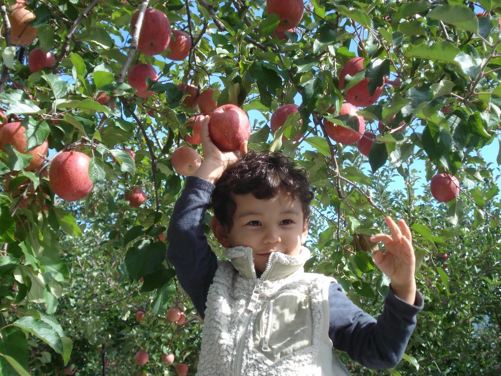 Apple Picking Boy