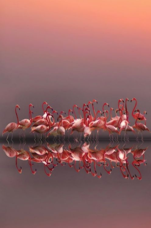Lovely Flamingoes of Varying Hues