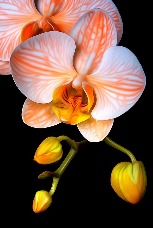 Orange and White Orchids