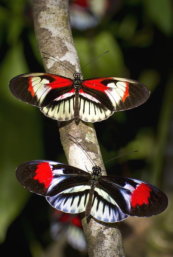 Piano Key Butterflies