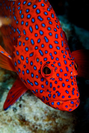 Polka Dots - Cocos (Keeling) Islands by Karen Willshaw