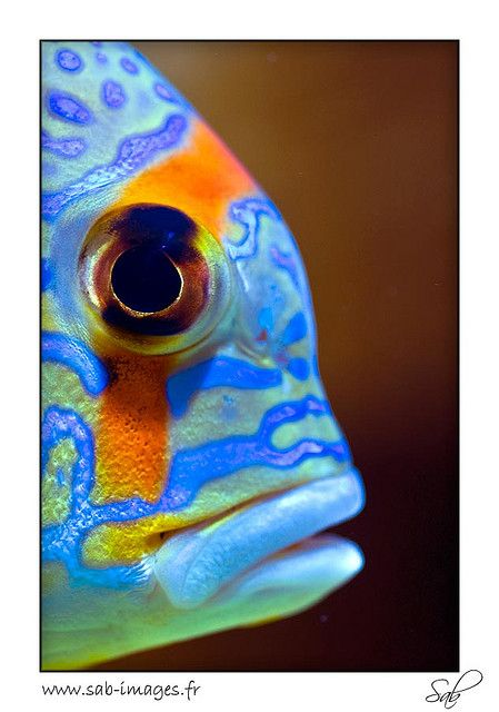 Fish of multi-colors on flickr by kactusficus