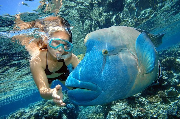 Large Grouper found on ytravelblog.com