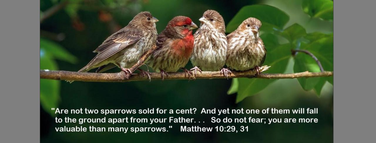 Four Sparrows2