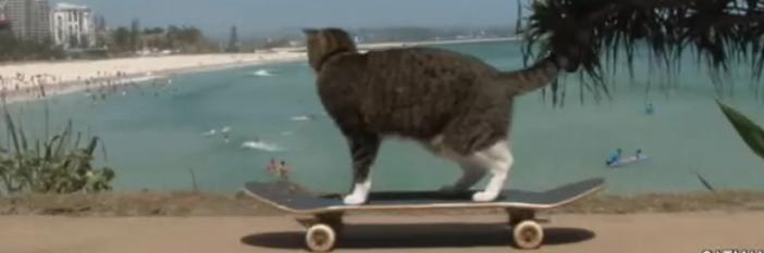 Didga the Cat