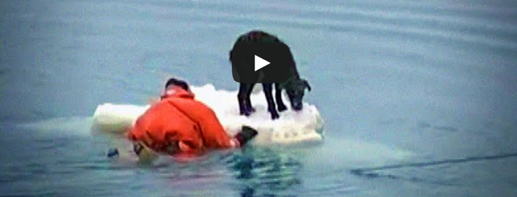 Dog Rescue from Ice Flow