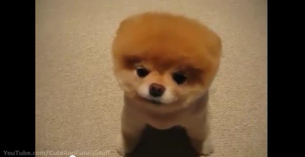 Puppy Cuteness 1