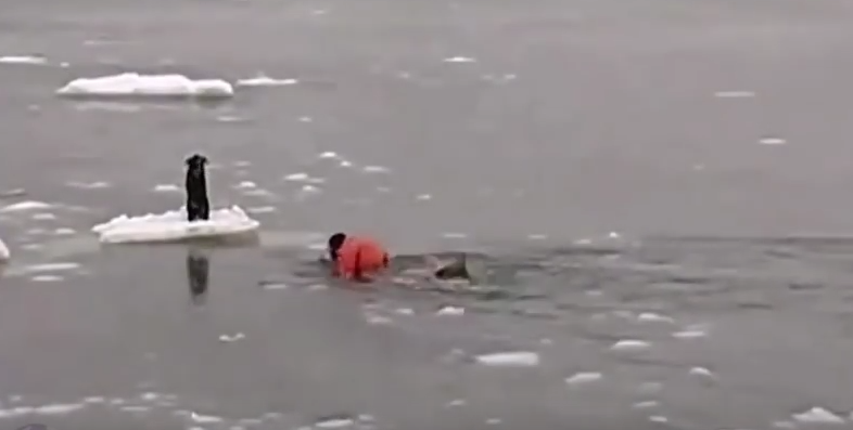 Man Braves Frigid Water to Save Dog
