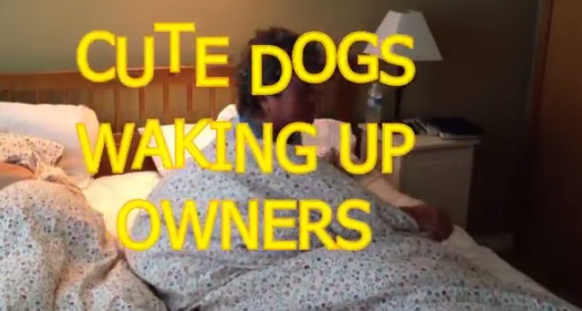 Animals Waking Up Owners